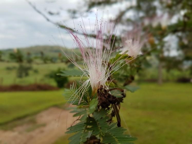 Bijzondere bloemen in Oeganda
