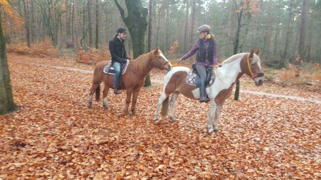 paardrijden oude pony bosrit