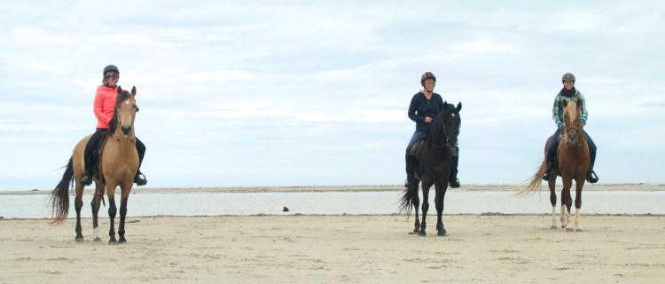 Djerba Tunesië Paardrijden