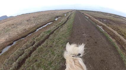 IJsland paarden Ishestar