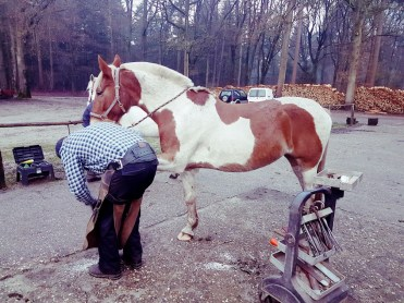 bont paard hoefsmid