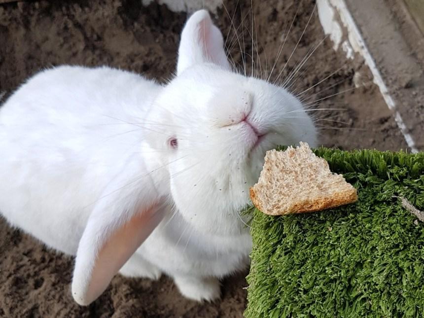 konijn brood wit