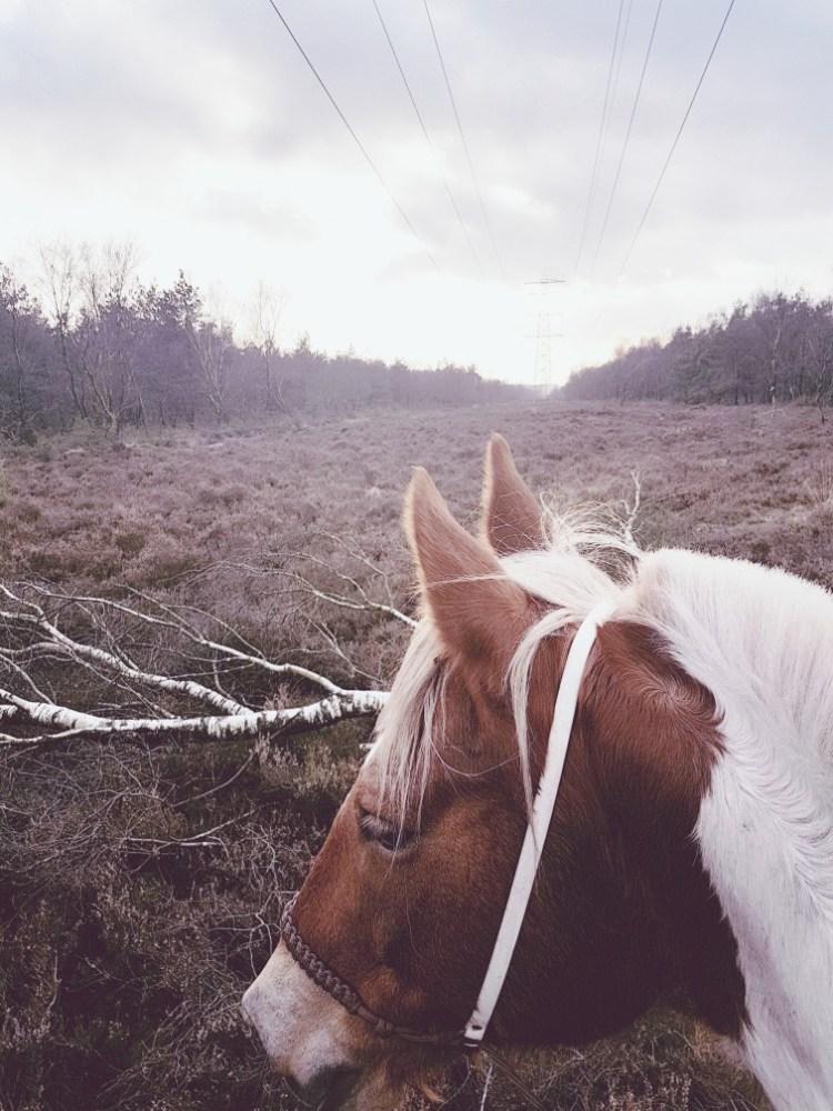 Paardrijden zonsondergang Koningshei