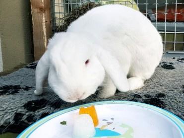 puddinkjes voor konijnen en knaagdieren