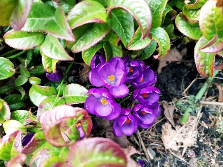 Lente voorjaarsbloemen