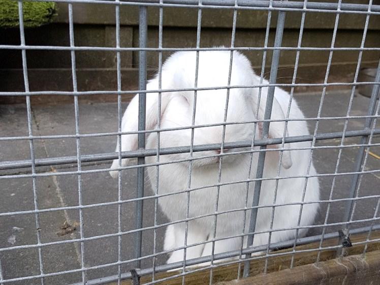 konijn achter tralies