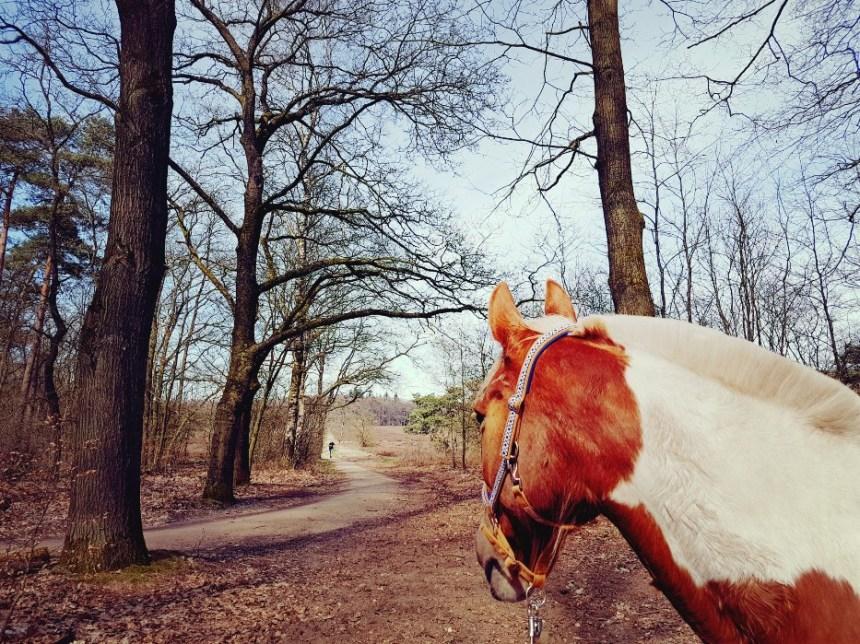 Boswandeling met pony