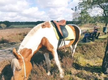 picknicken met paard op koningshei arnhem