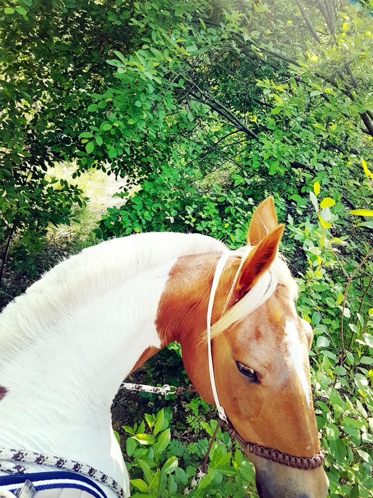 Bont paard bosrit warnsborn arnhem