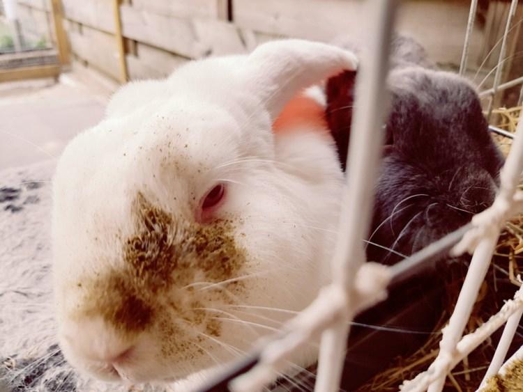konijnen samen houder