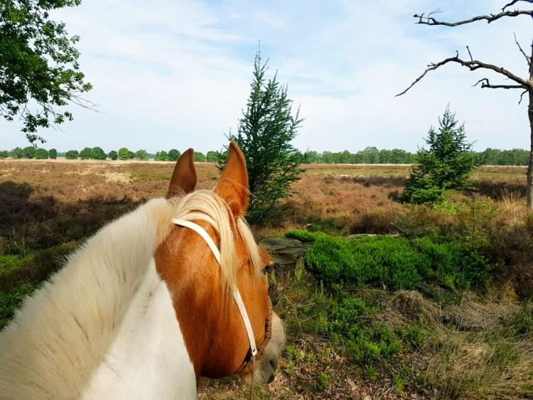 Paardrijden Nationaal Park de Hoge Veluwe
