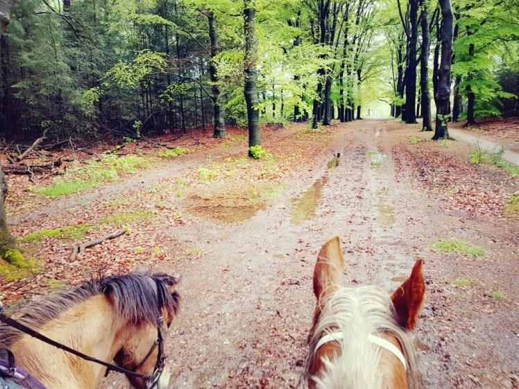 paardrijden in de regen