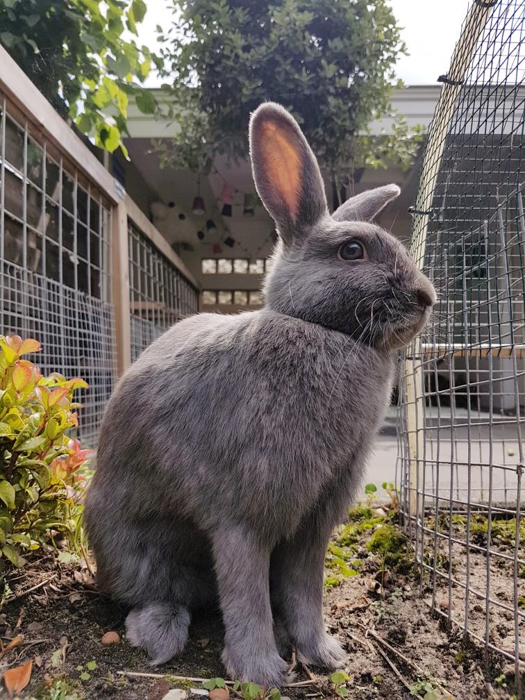 konijn loopt los in tuin