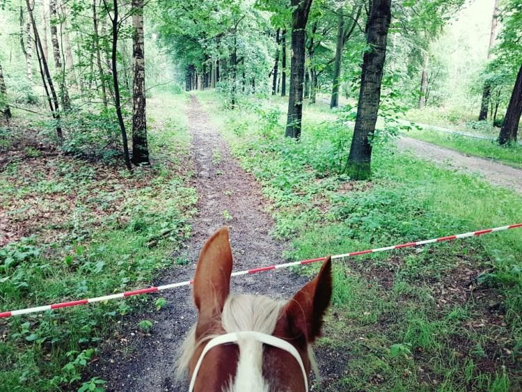 Bosrit paard bos Arnhem Schaarsbergen