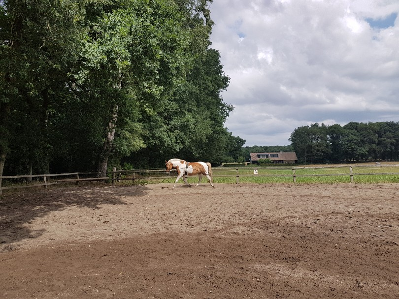 bonte pony longeren