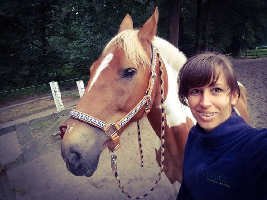 Zonsopkomst paard vroeg Arnhem Warnsborn