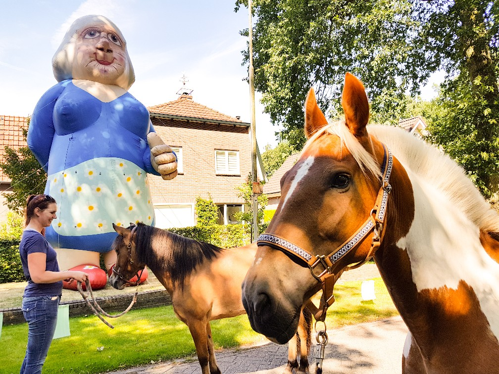 Paard schriktraining