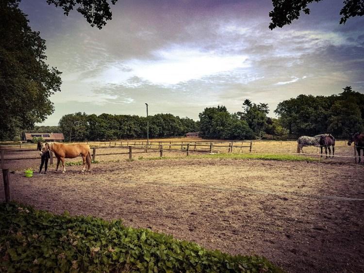blafband bij pony