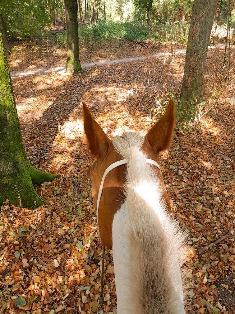bosrit pony herfst bladeren
