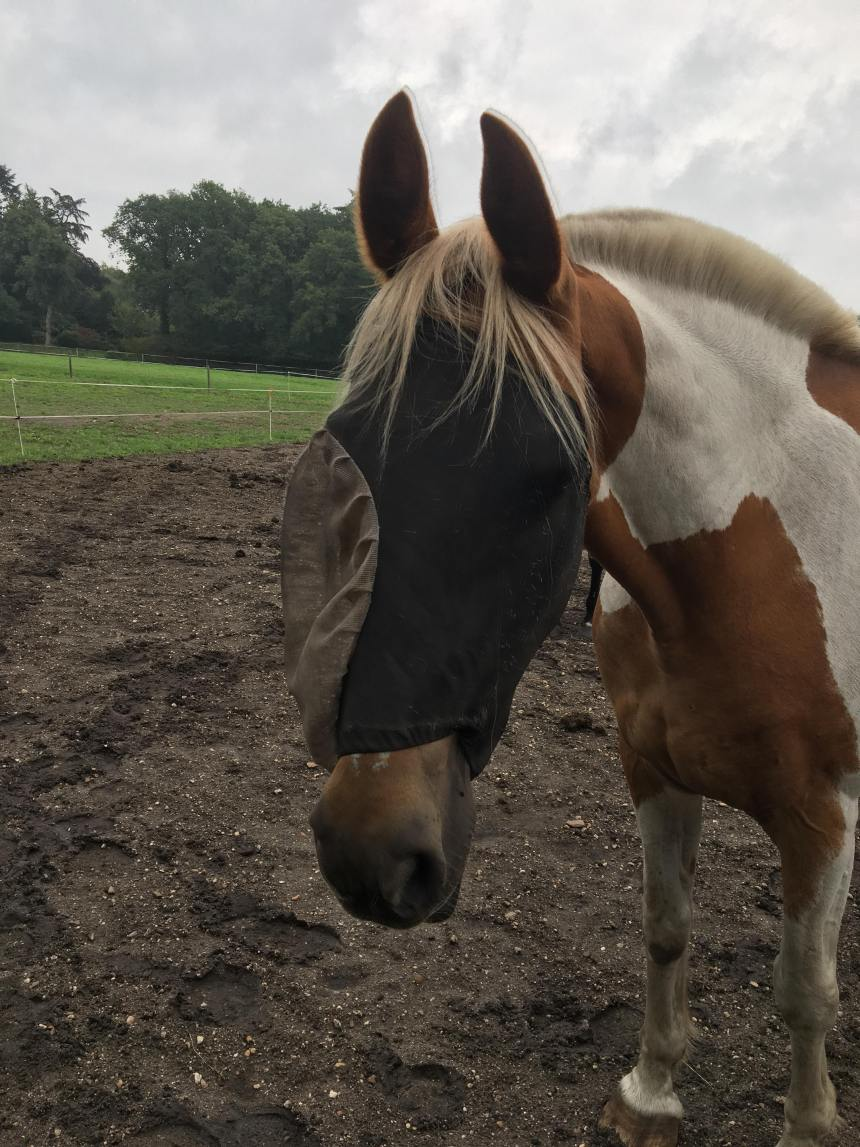 Vliegenmasker pony gaat af