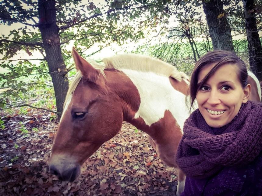 Loslopende pony in het bos Warnsborn