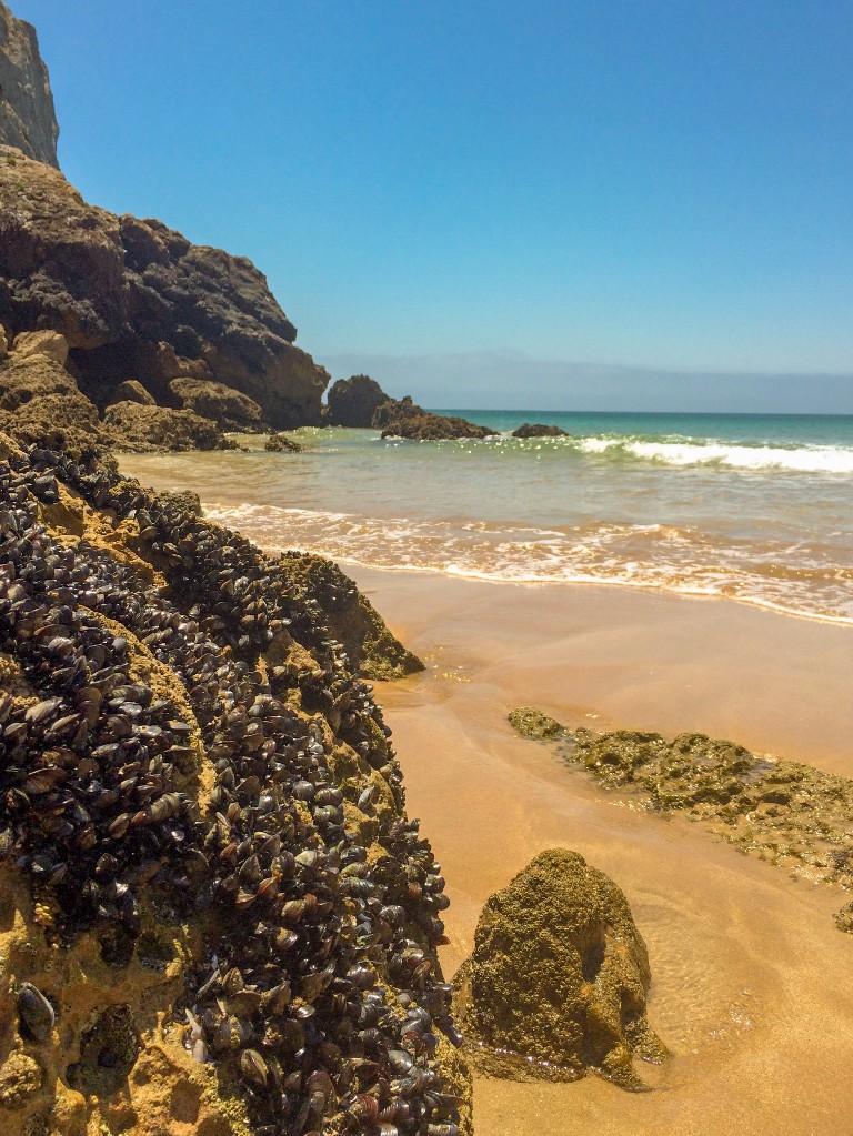 Stranden Algarve Portugal