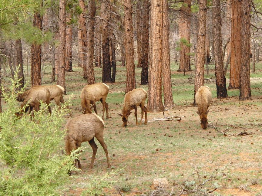 USA rondreis wilde dieren