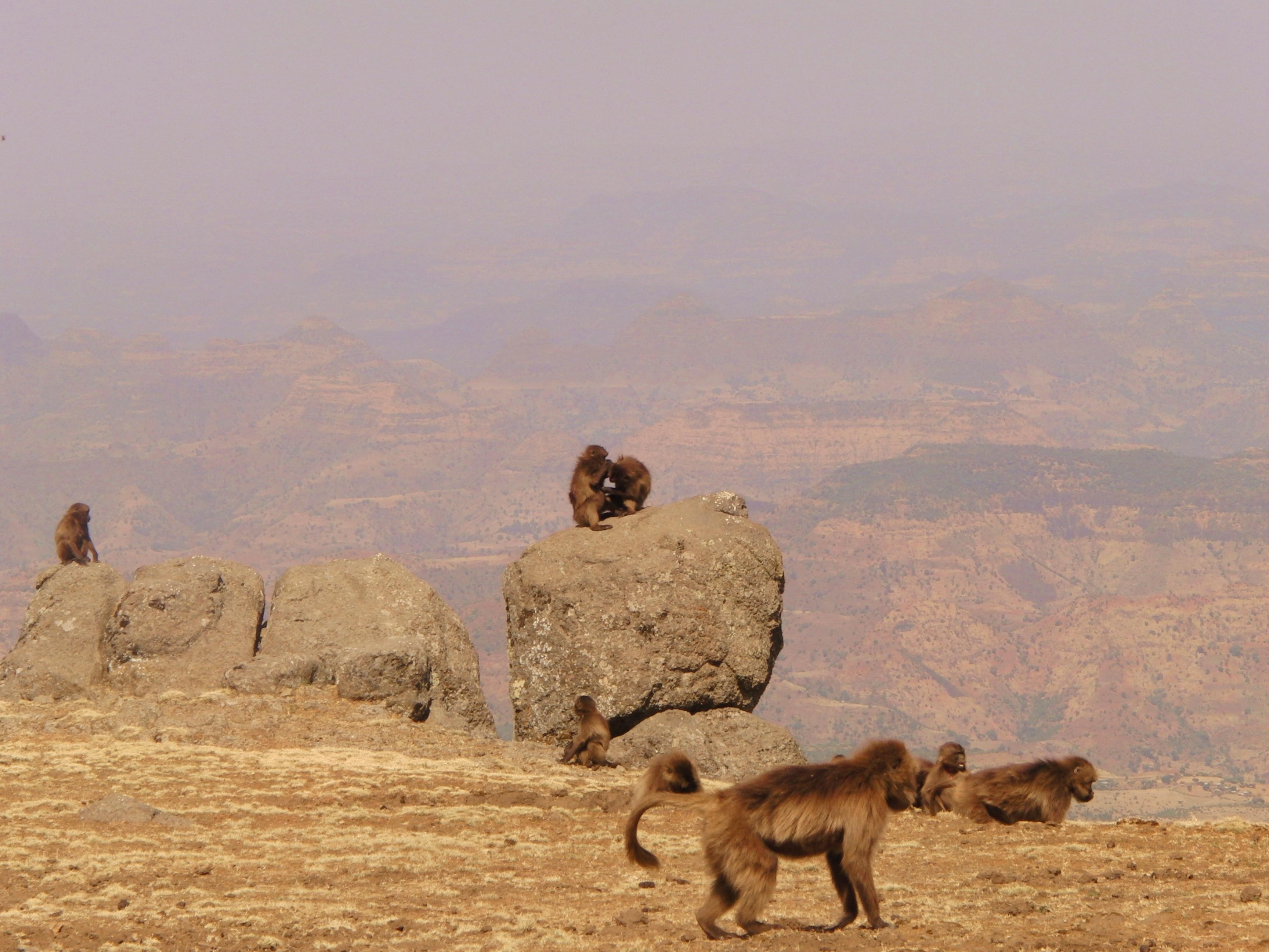 Ethiopië; bijzondere natuur en nationale parken die je gezien moet hebben