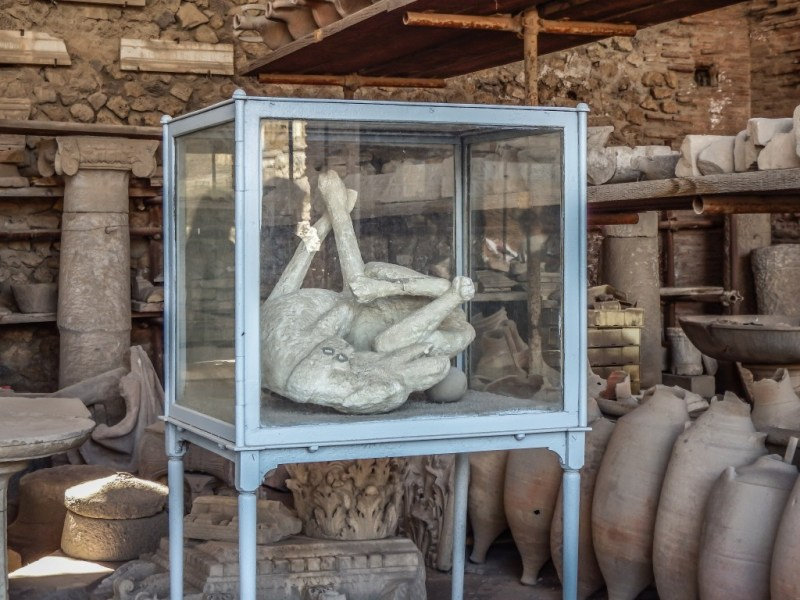 The artifact storehouse and body of a dog at pompeii in southern italy