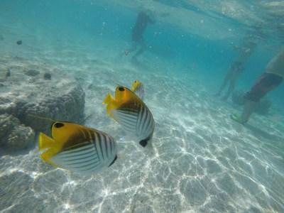 ダイビングの時、水中カメラにて