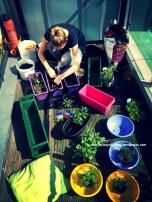 You don't need an allotment or garden to grow your own vegetables, herbs or fruits:) Nie potrzebujesz działki albo ogrodu aby uprawiać własne warzywa, zioła lub owoce:)