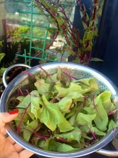 Freshly harvest:) Prosto z ogródka:)