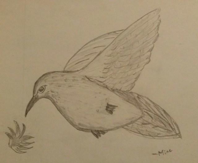Humming bird :)