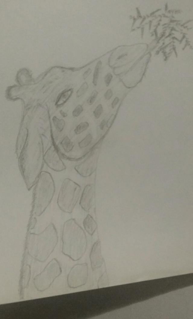 The Giraffe!