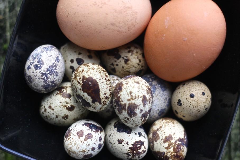 quail eggs ghana salad