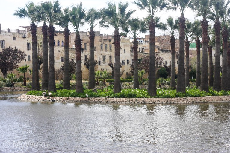 Jardin Jnan Sbil, the oasis of peace in Fez, Morocco