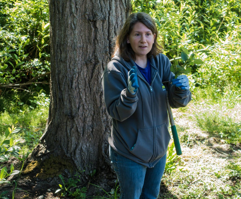 Lina Rose from King County Parks - West Hill Action Mob (WHAM) Work Party volunteers in Skyway Park, June 20 2015