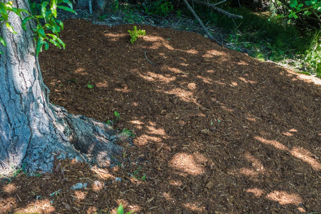 West Hill Action Mob (WHAM) Work Party - fresh mulch in Skyway Park, June 20 2015