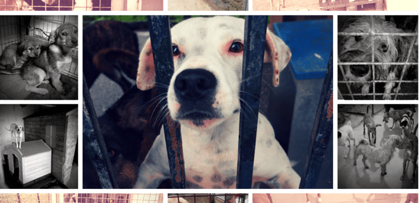 Impressions from a Spanish council pound #dogs #spain #adoptdontshop