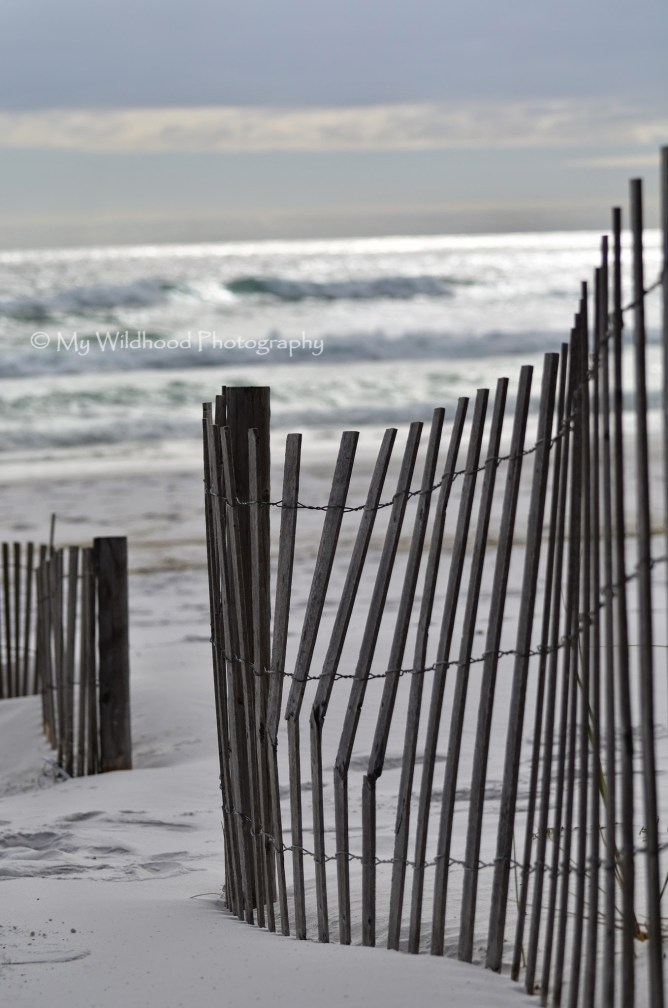 Dark Dune Fence (portrait), Destin, Florida