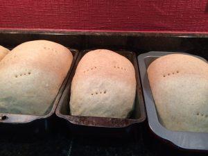 rye rising in pans 2