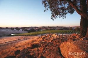 Fowles Wine vineyards