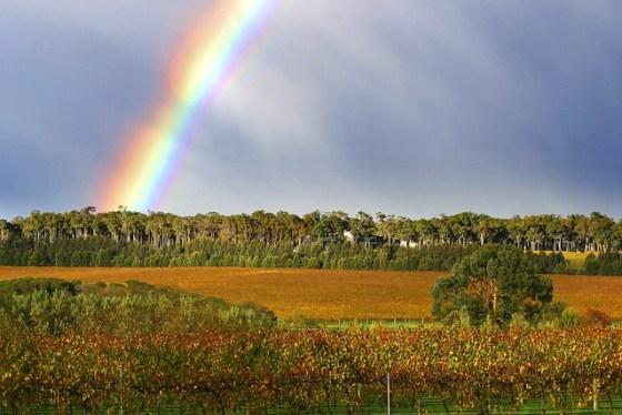 Howard Park Leston Margaret River Vineyard