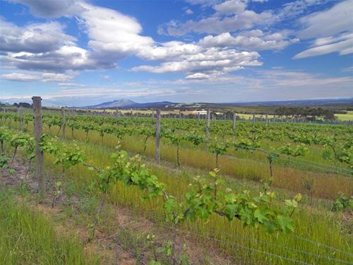 Porongorups vineyard