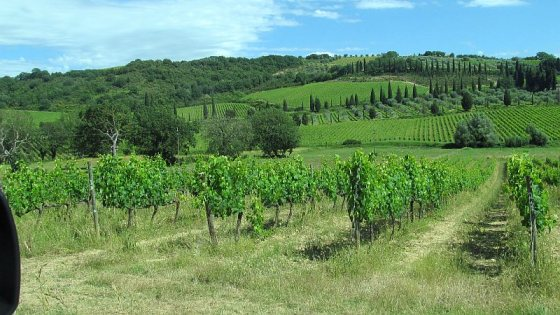 Vineyards near Sant' Antimo Abbey for Bottega Spa