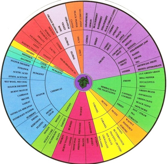 An aroma wheel from Dr. Anamosa's presentation.