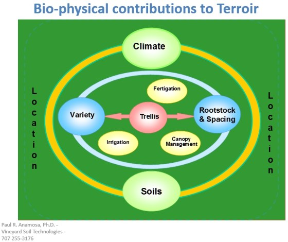 Bio-physical contributions to Terroir