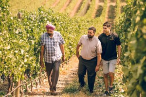 Gold Hill Winery founders in the vineyard
