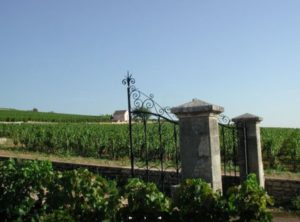 Drouhin vineyard Clos des Mouches