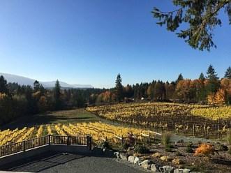 Blue Grouse Vineyard (Image Courtesy Blue Grouse Estate Winery)